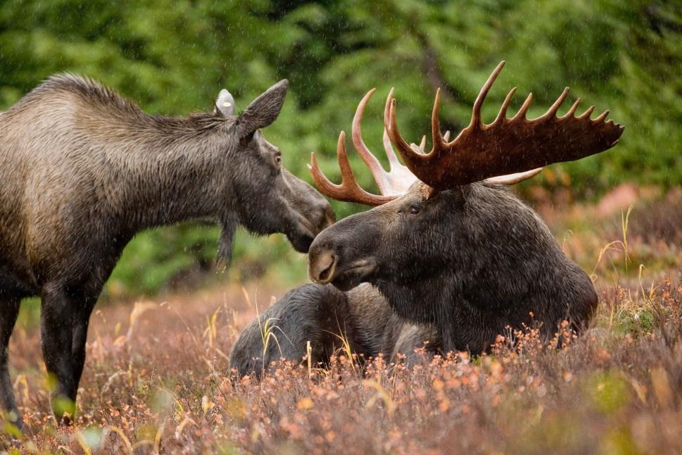 Image credit: Hagerty Ryan, U.S. Fish and Wildlife Service via Wikipedia
