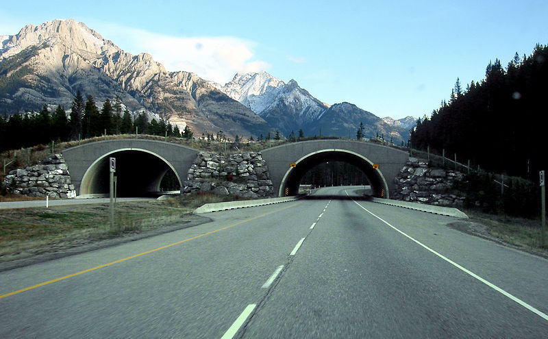 The Banff National Park overpasses are among the most well-known in the world and often used as models for other overpass structures. Image credit: Qyd via Wikipedia (CC BY 2.5)