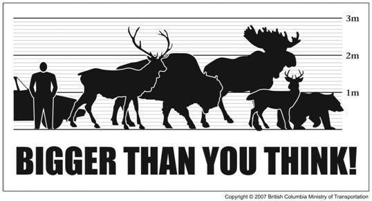 Bigger than you think